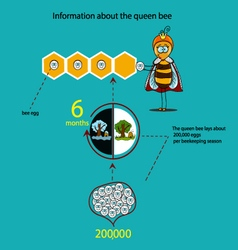 Information about the queen bee seasons vector
