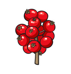 red mistletoe berries christmas holly berry vector image