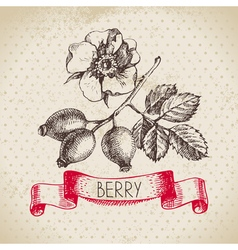 Rose hips Hand drawn sketch berry vintage vector image vector image