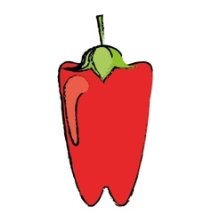 Drawing pepper red vegetable food icon vector