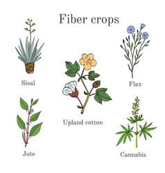 fiber crops - cotton sisal flax jute cannabis vector image