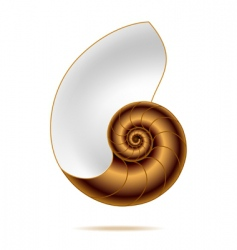 nautilus shell vector image
