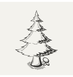 spruce on white background vector image vector image