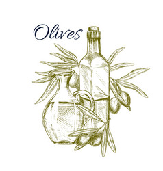 Olive fruit and oil sketch poster for food design vector