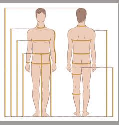 Mens body measurements vector