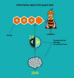 Information about the queen bee vector