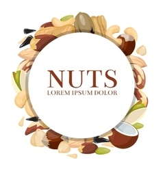 Healthy food concept with different nuts vector