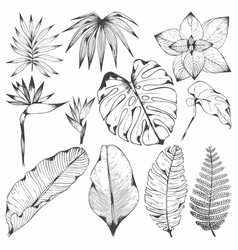tropical plants set of with vector image