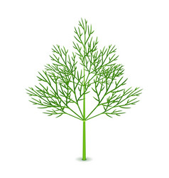 Fresh dill isolated on white vector