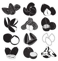Edible Nuts Collection vector image vector image