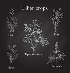Fiber crops - cotton sisal flax jute cannabis vector