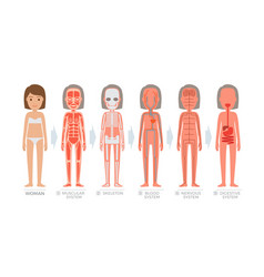Woman anatomy system and structure of human body vector