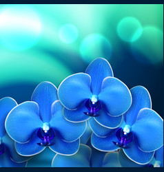 blue flower orchid background vector image