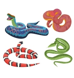 Colorful tropical exotic snakes isolated vector
