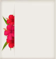 hibiscus background vector image vector image