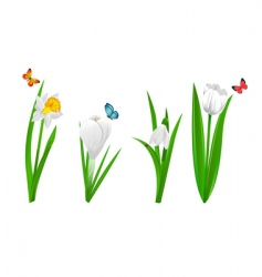 white spring flowers vector image