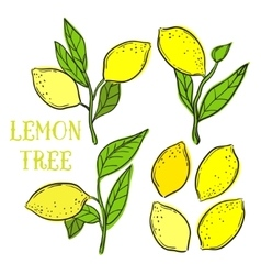 elements with lemons and tree leafs vector image