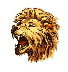 sketch color lion head vector image