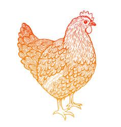 sketch of hen line art style standing chicken vector image vector image