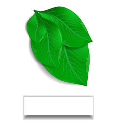 Green leaves with white banner vector image