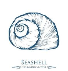 Seashell Drawing vector image