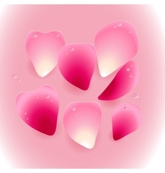 Pink rose petals with drops of water vector