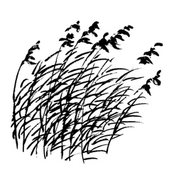 Sketch of bulrush vector image vector image