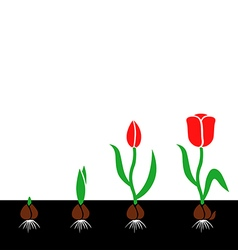 tulips cycle color vector image vector image