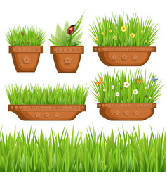 Green grass in pots vector