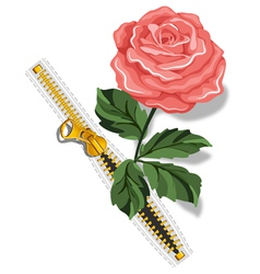 Zipper and rose vector image