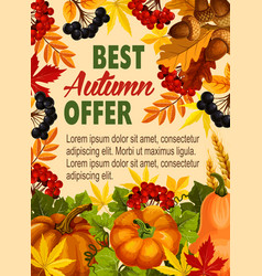 Autumn sale farm market discount poster vector