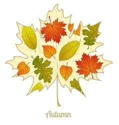 autumnal maple leaf background vector image