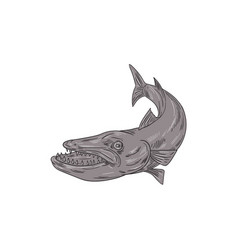 Barracuda swimming down drawing vector