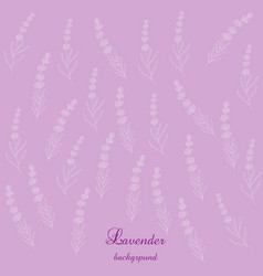Lavender flowers bsckground vector