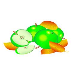 green apples vector image