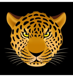 Leopard head vector