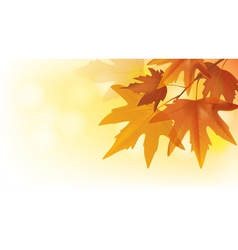 Beautiful autumn maple leaves vector image