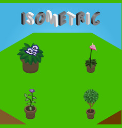 Isometric flower set of tree flower grower and vector