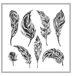 Set of black decorative feathers on a white vector image vector image