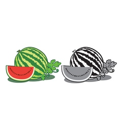 Water melon vector