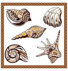 Set decorative ornamental ethnic of seashells on a vector
