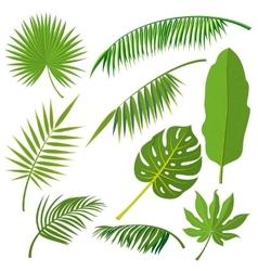 Tropical palm tree jungle leaves set vector
