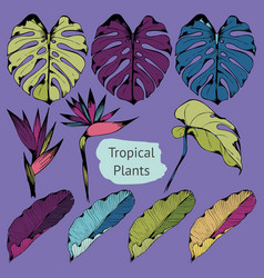 Colorful tropical plants set of vector