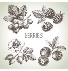 Hand drawn sketch berries set of eco food vector image