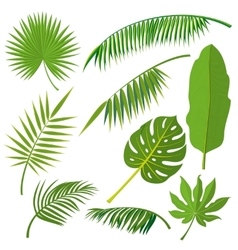 Tropical palm tree jungle leaves set vector