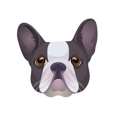 bulldog face colored in grey and white vector image vector image