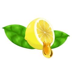 lemon and honey gradient mesh vector image vector image