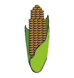 Drawing corn cob ripe leaves icon vector
