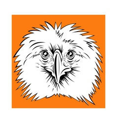 Philippine eagle head vector