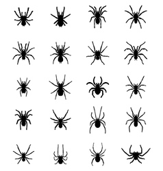 Silhouettes of spiders vector